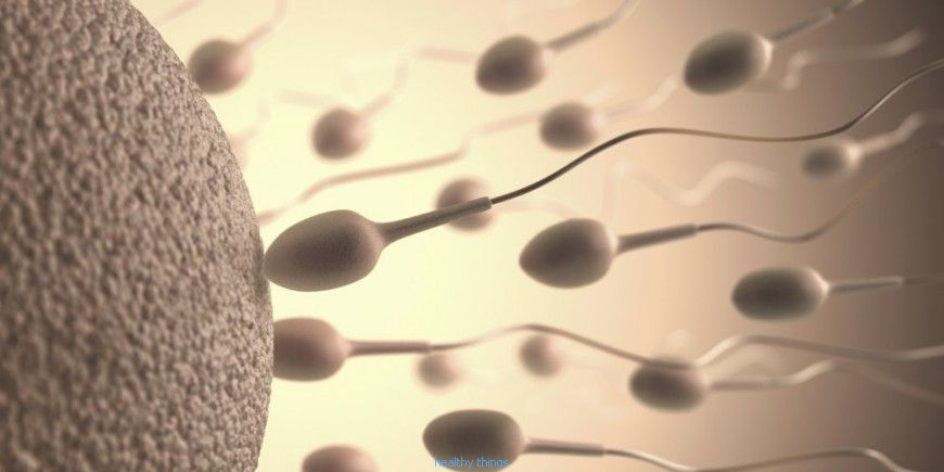 Fertilization: The determination of sex