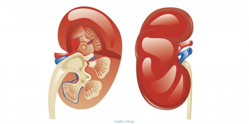 The kidneys: The production of hormones