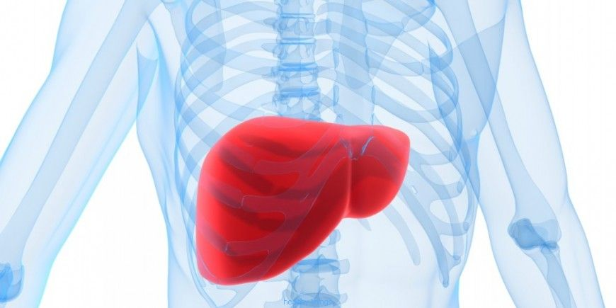 The liver: the production of indispensable molecules