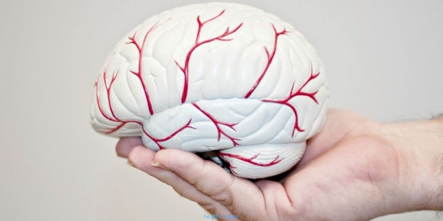 The brain: sensory organs - Useful Information