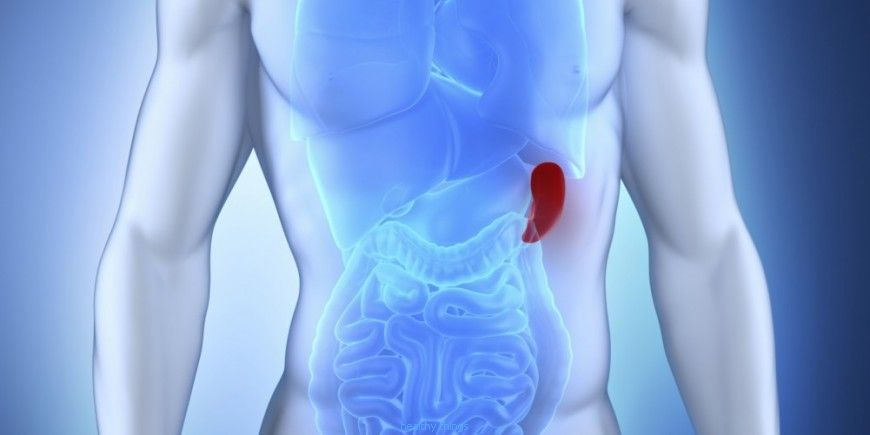 The spleen: An increase in volume - Useful Information