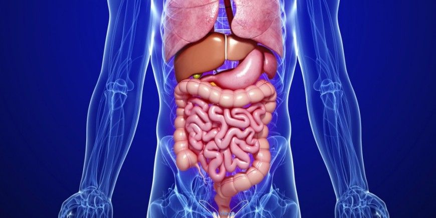 Digestion: the gastric time of digestion