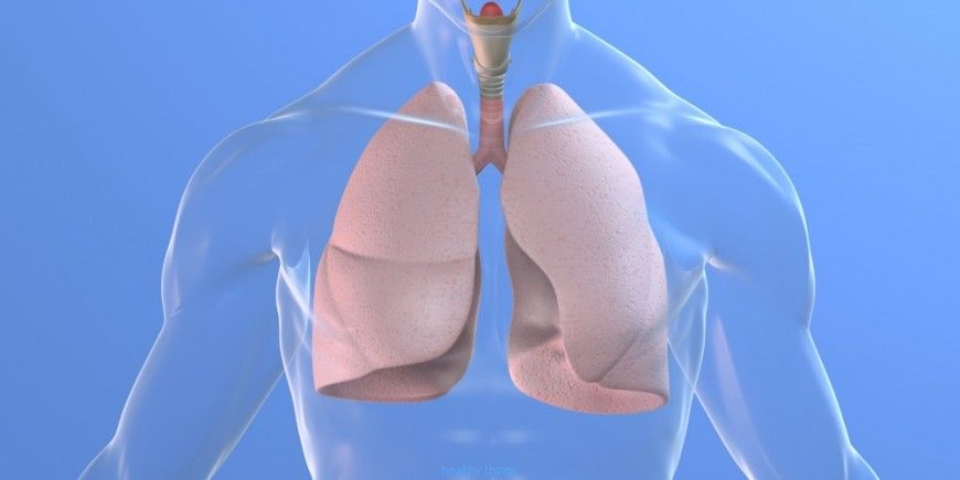 The lungs: the auscultation