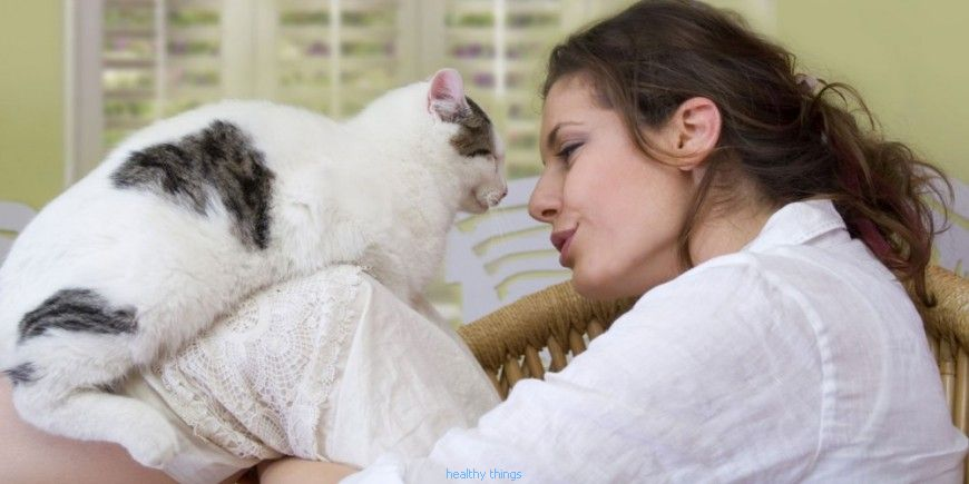 Cat allergy: the causes - Diseases
