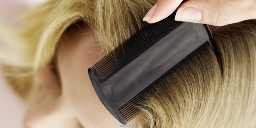 Lice: how to get rid of it? - Diseases